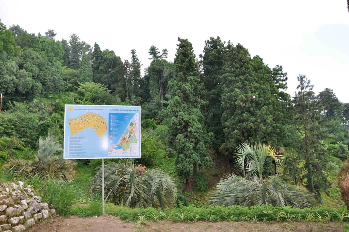 (Deutsch) Botanischer Garten Batumi